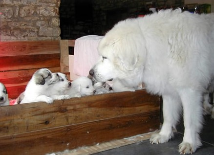 mother dog with puppis