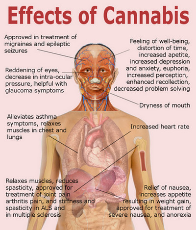 Marijuana-Effects