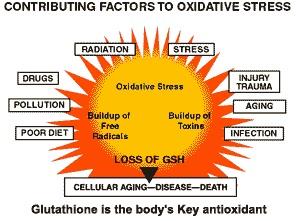 glutathione_oxidative aging