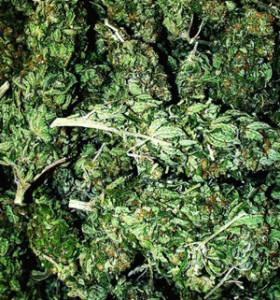 marijuana (THC)  pictures