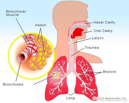 emphysema-alveolar gas exchange