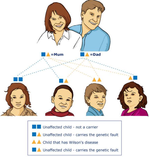 wilson's disease gene 1
