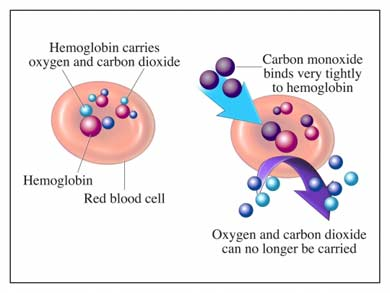 The Mechanism of Carbon Monoxide Poisoning